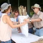 Costa Rica: Recomiendan Bancos Forrajeros para Enfrentar Cambio Climático