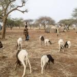 TerrÁfrica: Programa de Gestión Sostenible del Agua y la Tierra