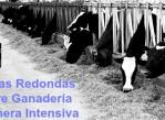 mesas_redondas_sobre_ganaderia_lechera