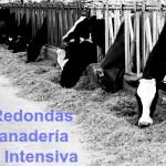 Mesas Redondas de Importancia en Simposio Internacional de Producción Lechera en UNA La Molina