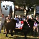 Brangus: Genética Paraguaya para el Mundo