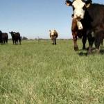 Consejos para Potenciar la Producción de Pasturas
