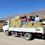 Repartirán 25,000 Pacas de Heno y kits Veterinarios en Región Junín