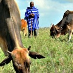 El Papel de la FAO en la Sanidad Animal