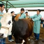 Programa de Becas para Estudiantes Latinoamericanos de Veterinaria 2016