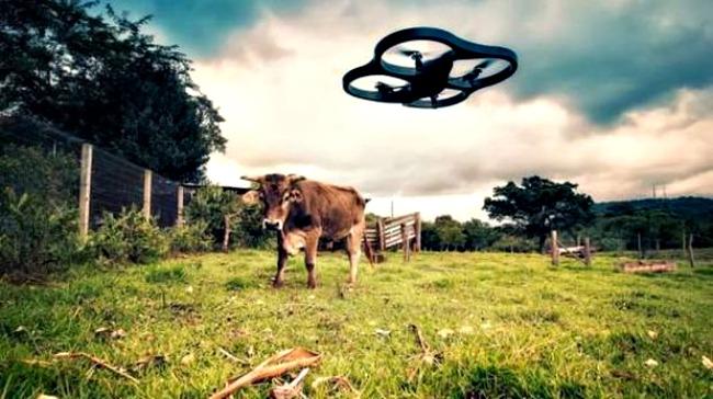 drones_para_ganaderia_Australia