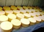 quesos_organicos_arequipa