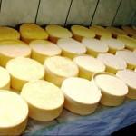 Arequipa: Productores de Quesos Orgánicos Incrementan Acopio de Leche