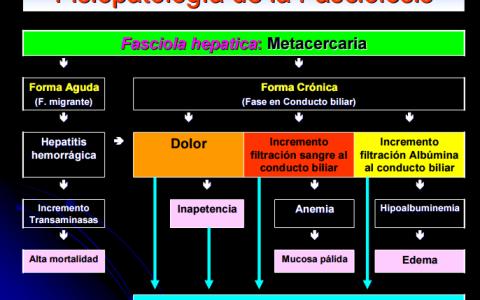 Fisiopatología de la Fasciolosis