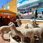 Minagri Realizó Plan de Apoyo Permante a Productores y Ganaderos tras Heladas  en Puno