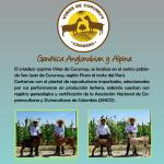 Criadero Caprino Viñas de Curumuy Presenta sus Primeras Pariciones