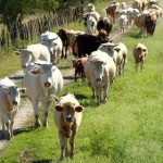 Construyen Laboratorio de Genética Animal para Optimizar la Calidad de la Carne Vacuna