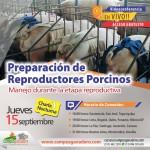 EN VIVO: Preparación de Reproductores Porcinos – Acceso Gratuito