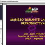 Videoclase: Manejo Durante la Etapa Reproductiva en Porcinos
