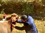 nutrimin-en-el-distrito-de-chiquian-provincia-de-bolognesi-departamento-de-ancash-manejo-de-anestro-lactacional