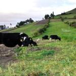 Proyecto Ecuatoriano de Ganadería Sostenible para Enfrentar el Cambio Climático