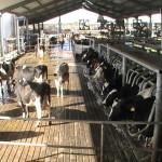 Enfrentando la Resistencia a los Antimicrobianos en Granjas y Alimentos