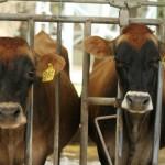 Productores de Biogás Mostrarán Casos de Éxito en Costa Rica