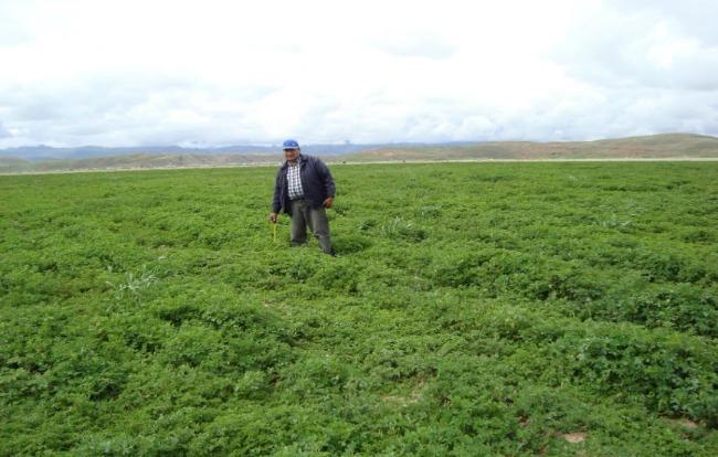 desarrollo-de-la-ganaderia-andina