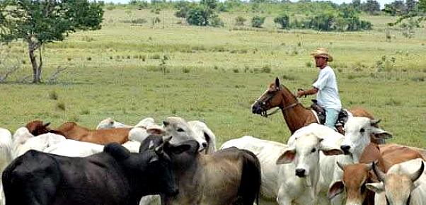 ganaderia-campesino-holguin-nicaragua