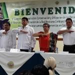 Señalan Ventajas de Trabajar con Bovinos Criollos