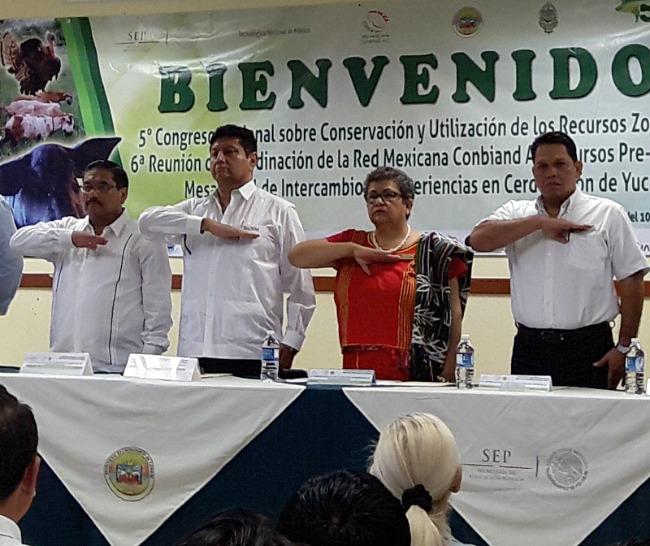 ventajas_de_trabajar_bovinos_criollos