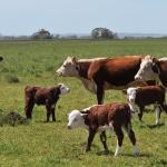 Alimentación Programada, Clave en el Rinde del Rodeo