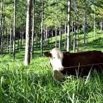 Modelos Silvopastoriles, Propuesta de Agroindustria para Mitigar el Cambio Climático
