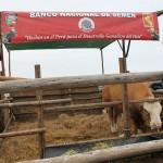 Molineros en V Feria Nacional Ganado Lechero UNALM