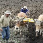 IICA, FAO y CEPAL presentarán en España Informe Conjunto Sobre la Situación de la Agricultura de las Américas