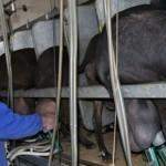 España, Potencia Europea en Producción de Leche de Cabra