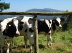 agricultura_ganadera