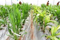 Presentan Nueva Tecnología para Acelerar Cultivos y Crianza de Ganado en Kenia
