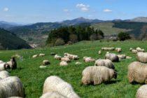 El Pastoreo Regenerativo Mejora la Salud del Suelo y la Biodiversidad Vegetal