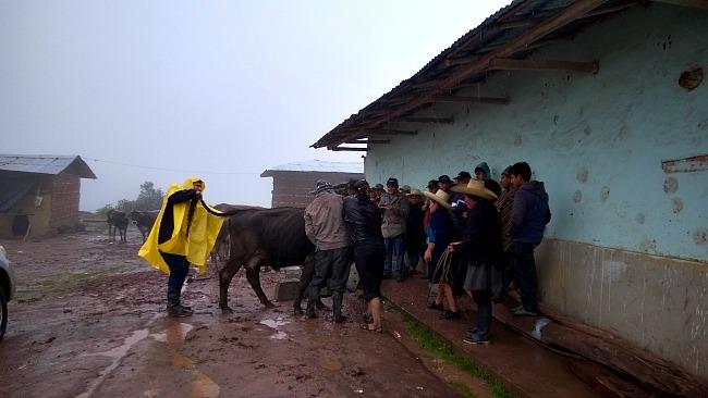 totalvet_capacitacion_cajamarca_1