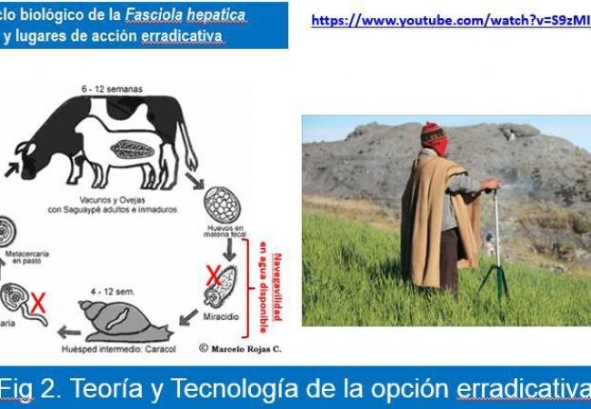 fasciola-hepatica-erradicacion_2016