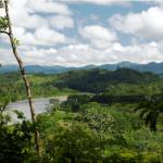 Perú Evalúa Incentivos Financieros y Tributarios Para Inversión en Bosques y Ganado