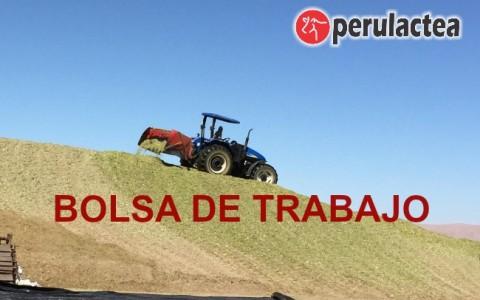 bolsa_de_trabajo_majes