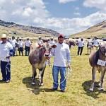 Cajamarca: Gobierno Regional Anuncia Paquete de Proyectos por S/ 37 Millones en Ganadería