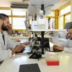 La UNLP y el Conicet presentan un Desarrollo Para Mejorar la Producción Bovina