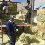 Iniciarán Entrega de Alimento Para Ganado Afectado por la Sequía en Lambayeque