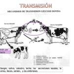 Leucosis Bovina:  Diagnóstico, Transmisión, Control y Prevención