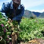 Producción y Mejora Genética: Pilares para Alimentar al Mundo