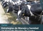 sanidad-ganado-bovino