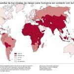MINSA: Aprueba Norma Técnica de Salud para la Prevención y Control de Rabia Humana en el Perú