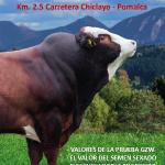 Spermex: Líder Mundial en Inseminación Artificial llega al Mercado Peruano