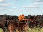 ganadería-argentina_bbc