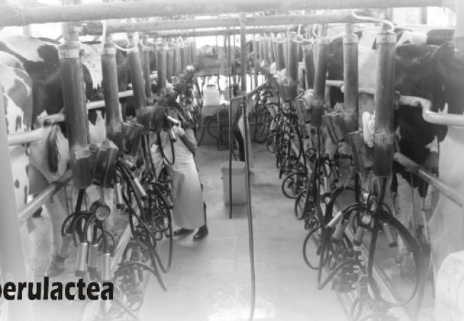 industria_lechera_peruana