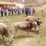Pasco: Más de 80 Ganaderos se Capacitan en Manejo y Crianza de Bovinos