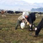Ministerio de Agricultura del Perú Sembrará 150 Mil Hectáreas de Pastos Para la Ganadería